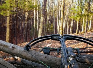 6 Best Crossbow Hunting Bolts